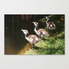 Three Little Ducklings Canvas Print