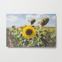 Allora | Sunflowers Metal Print