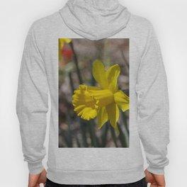 Daffodil 1 Hoody