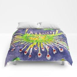 drosera gigantea Comforters
