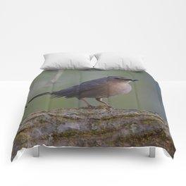 Gray Catbird near Sunrise Comforters