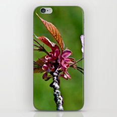 Pink Blossoms of Spring iPhone & iPod Skin