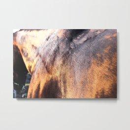 Wet Horse Metal Print