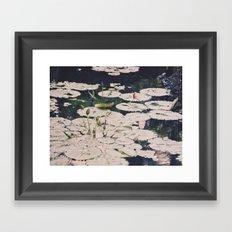 Water lilys Framed Art Print