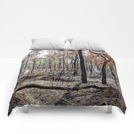 Fire damaged forest Comforters