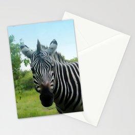 Zebra Stare Stationery Cards