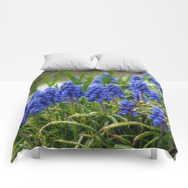 Grape Hyacinth Comforters