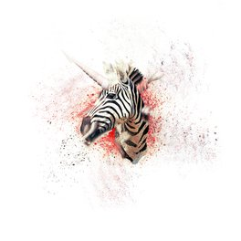 Window Curtain - Zebra - Konstantinos Rigoulis