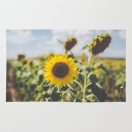 Allora | Sunflowers Rug
