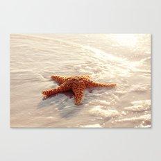 Sugar Starfish I Canvas Print