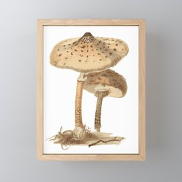Agaricus Procerus Framed Mini Art Print