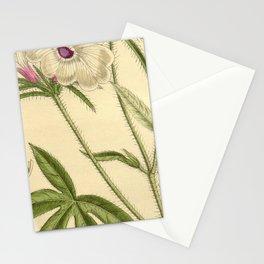 Ipomoea pes tigridis longibracteata 145 8806 Stationery Cards
