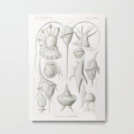 Peridinea–Geikelhütchen from Kunstformen der Natur (1904) by Ernst Haeckel. Metal Print