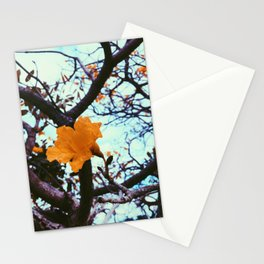 Fall Bloom Stationery Cards