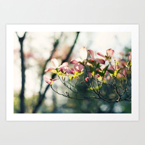 Pink Dogwood II Art Print