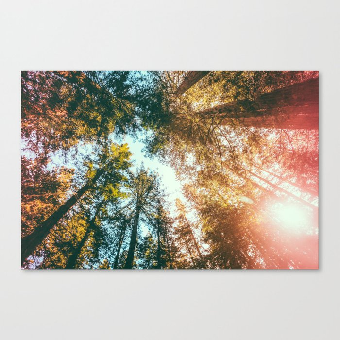 California Redwoods Sun-rays and Sky Canvas Print