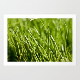 Fresh Summer Grass Art Print