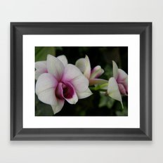 Orchids #2 Framed Art Print