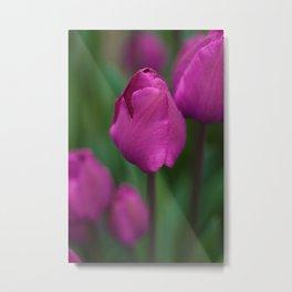 Deep Purple Tulips Metal Print