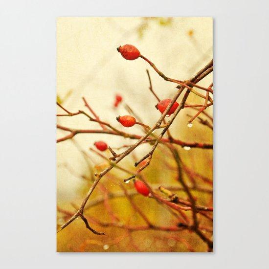 vintage rosehips Canvas Print