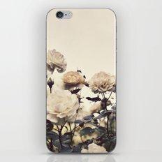 Yellow Rose Garden iPhone & iPod Skin