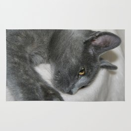 Close Up Portrait Of A Relaxed Grey Cat  Rug