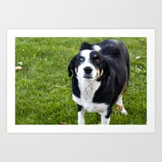 smiling dog Art Print