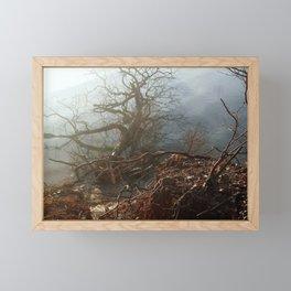 Fallen Tree Framed Mini Art Print