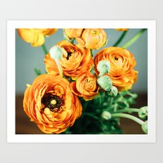 Orange ranunculus Art Print