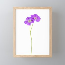 Purple Geraniums Framed Mini Art Print