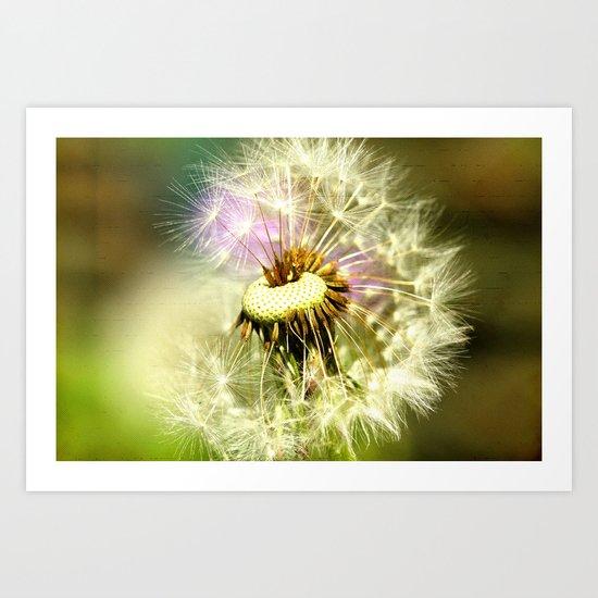 Dandelion seeds2 Art Print