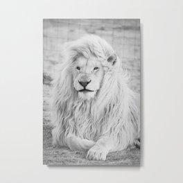 Albino Lion (Black and White) Metal Print