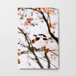 Autumn in The Blue Ridge Mountains Metal Print
