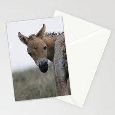Baby Przewalski's Horse Stationery Cards