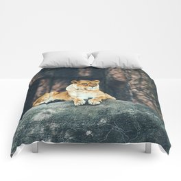 Lion on the rock Comforters