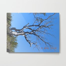 tree, naked, no bark, road trip,  Metal Print