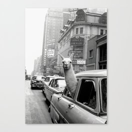 Llama Riding in Taxi, Black and White Vintage Print Canvas Print
