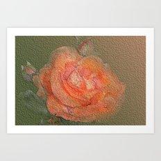 rose frome the garden Art Print
