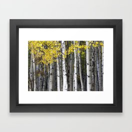 Yellow, Black, and White // Aspen Trees in Crested Butte Framed Art Print