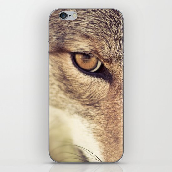 In the eyes of the Coyote iPhone & iPod Skin