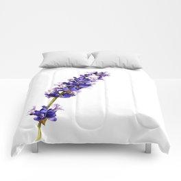 Mediterranean Lavender on White Comforters