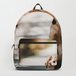 Dog by Drew Hays Backpack