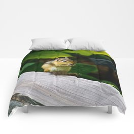 Chipmunk Chow Time Comforters