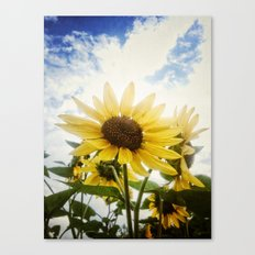 Summer Sunflower Sky Canvas Print