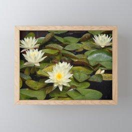 Pale Yellow Water Lilies Framed Mini Art Print