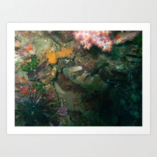 Mystery fish? Art Print
