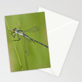 Damselfly (Lestes dryas - male) Stationery Cards