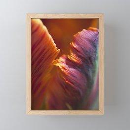 Parrot Tulip Petal Framed Mini Art Print