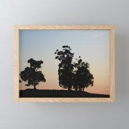 Eucalyptus trees at sunset Framed Mini Art Print