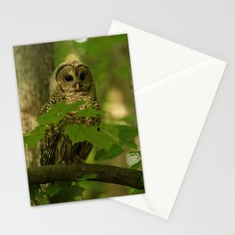 Beautiful Barred Owl Mother Stationery Cards